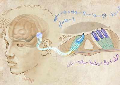Graphical Abstract–Computational Mathematics as applied to Hearing Loss