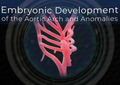 Embryonic Development of the Aortic Arch and Anomalies