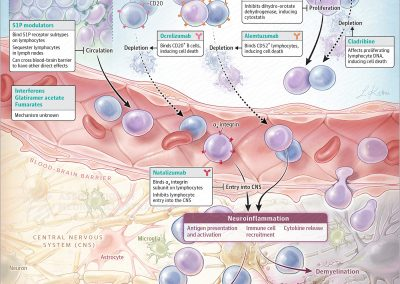 Treatment Targets of Disease-Modifying Therapies Currently Approved for Multiple Sclerosis