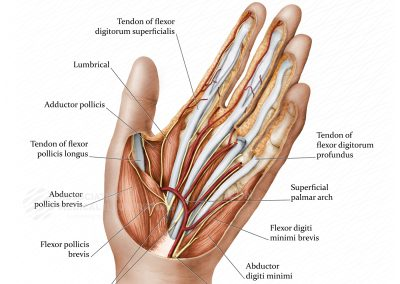 View of the Hand
