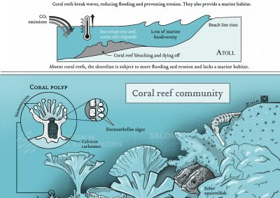 Benefits of coral reef communities to the environment